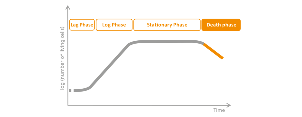 Schematic representation of the death-phase.