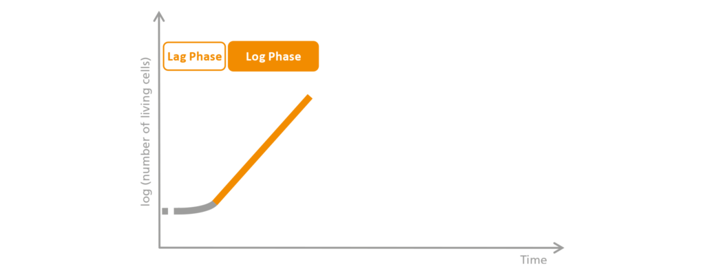 Schematic representation of the log phase.