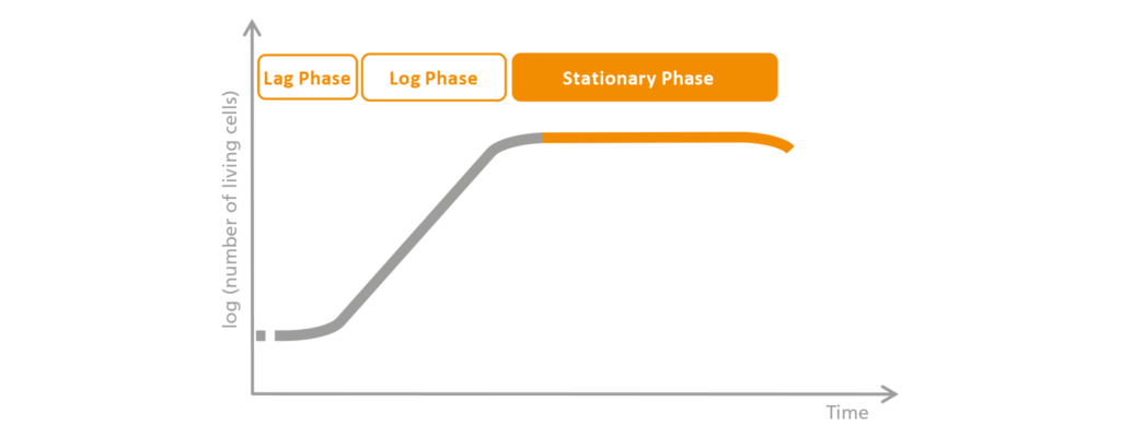 Schematic representation of the stationary phase.
