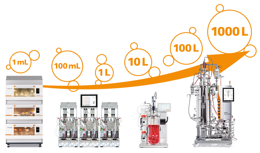 Scale up process from shake flask to bioreactor